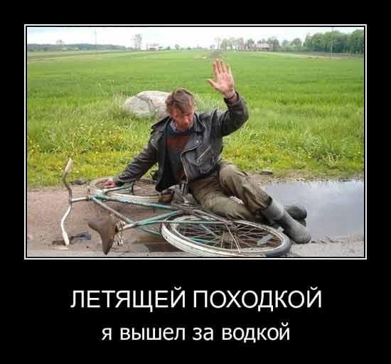смешные фотки на аватарку: