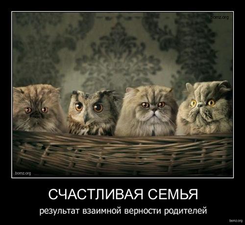 Смешные картинки о животных